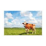 Vaca curiosa que se coloca en prado impresion de lienzo
