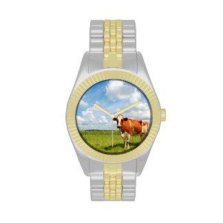 Vaca curiosa que se coloca en prado reloj de mano