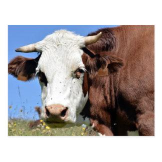 Vaca de Abondance en las montañas francesas Tarjetas Postales