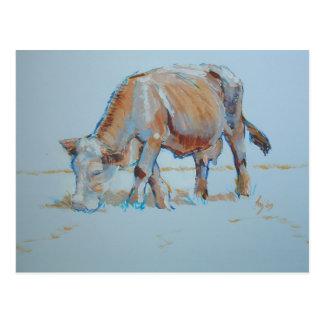 Vaca de Brown que pasta los bóvidos bronceados Tarjeta Postal