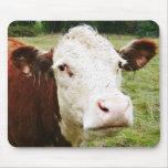 Vaca de ganado hecha frente blanca tapetes de ratón