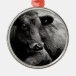 Vaca de ganado negra de Angus Adorno Para Reyes
