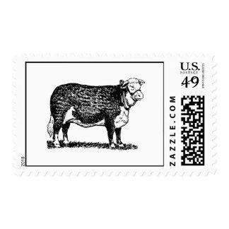 Vaca de Hereford