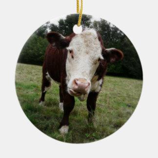 Vaca de Hereford que pega hacia fuera la lengua Adorno Navideño Redondo De Cerámica