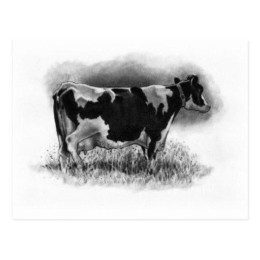 Vaca de Holstein: Dibujo de lápiz original: Postal