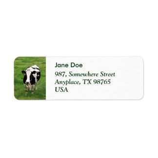 Vaca de Holstein Etiqueta De Remite