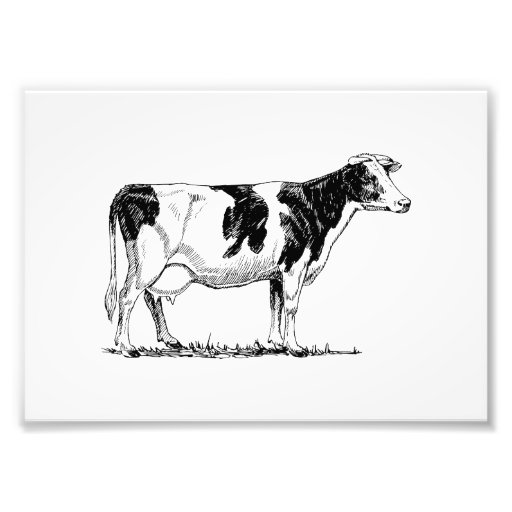 Vaca de Holstein Cojinete