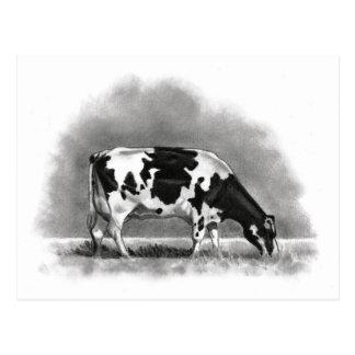 Vaca de Holstein que pasta: Dibujo de lápiz del Postal