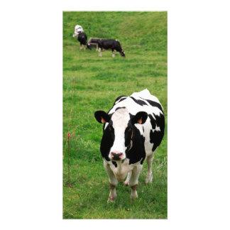 Vaca de Holstein Tarjeta Fotográfica