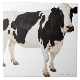 Vaca de Holstein tauro del Bos Azulejos Cerámicos