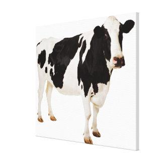 Vaca de Holstein (tauro del Bos) Lienzo Envuelto Para Galerías