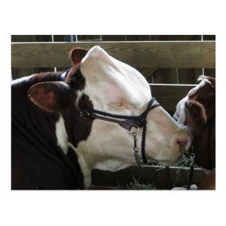 Vaca de la feria del condado postales