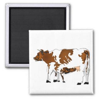 Vaca de la madre con el becerro imán cuadrado