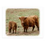 Vaca de la montaña con el becerro 9Y316D-048 Tarjeta Postal