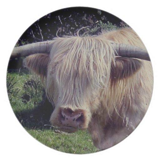 Vaca de la montaña de Dartmoor en el movimiento Platos