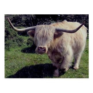 Vaca de la montaña de Dartmoor en el movimiento Tarjeta Postal