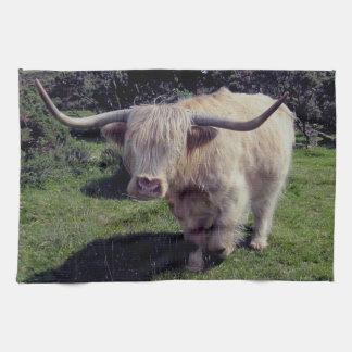 Vaca de la montaña de Dartmoor en el movimiento Toalla