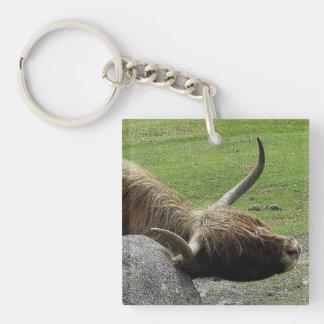 Vaca de la montaña de Dartmoor que pica en roca Llavero Cuadrado Acrílico A Una Cara