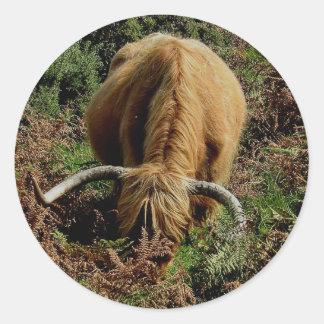 Vaca de la montaña en helecho en dartmoor etiqueta