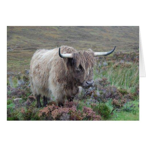 Vaca de la montaña felicitación