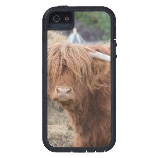 Vaca de la montaña iPhone 5 fundas