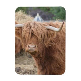 Vaca de la montaña imán de vinilo