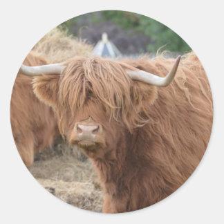 Vaca de la montaña etiquetas