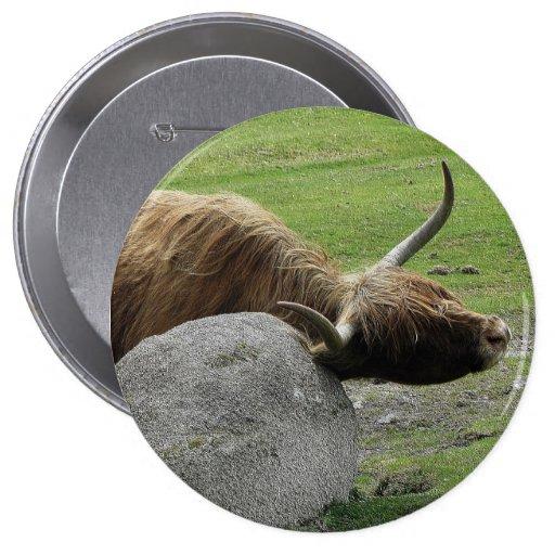 Vaca de la montaña que rasguña en roca en dartmoor pin
