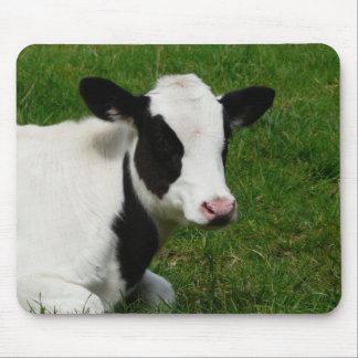 Vaca de leche de la lechería de Holstein en hierba Alfombrillas De Ratón