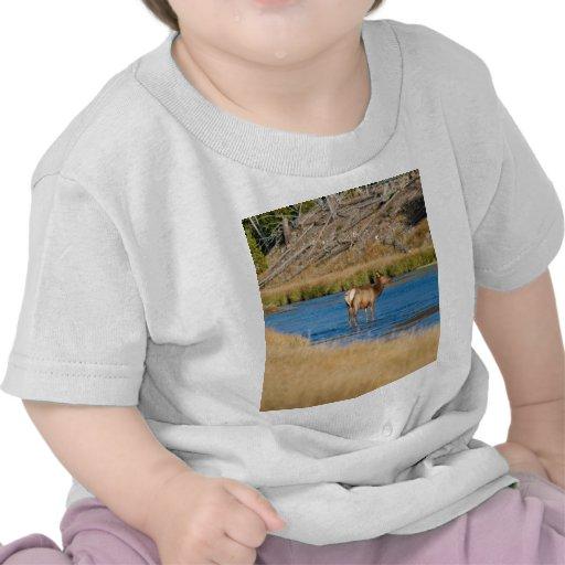Vaca de los alces camisetas