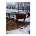 vaca de Madison Postal