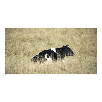 Vaca de reclinación - Photocard Tarjetas Fotograficas