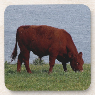 Vaca de rubíes del sur Grazeing de Devon en la Posavasos