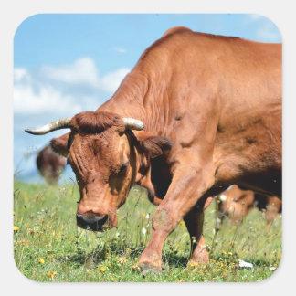 Vaca de Tarine en las montañas francesas Pegatina Cuadrada
