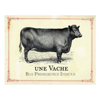 Vaca de Vache Tarjeta Postal
