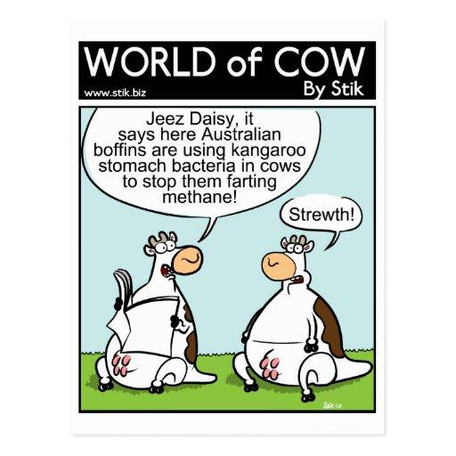 Vaca del canguro tarjeta postal