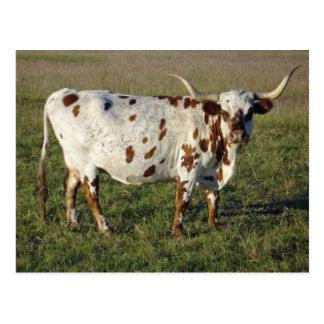 Vaca del fonolocalizador de bocinas grandes de tarjetas postales
