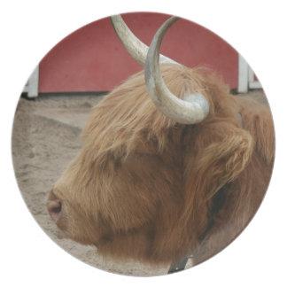 Vaca del ganado de la montaña plato de comida