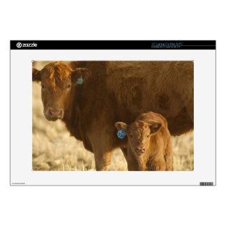 Vaca del mestizo con el becerro cerca de Choteau, 38,1cm Portátil Calcomanía