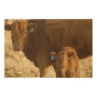 Vaca del mestizo con el becerro cerca de Choteau, Cuadro De Madera