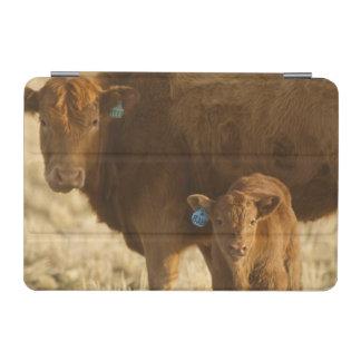 Vaca del mestizo con el becerro cerca de Choteau, Cubierta De iPad Mini