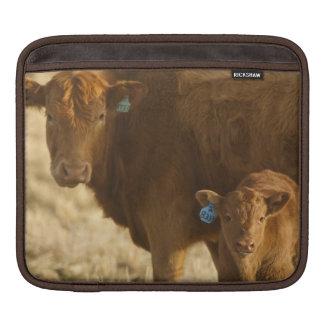 Vaca del mestizo con el becerro cerca de Choteau,  Fundas Para iPads