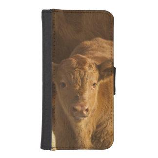 Vaca del mestizo con el becerro cerca de Choteau, Fundas Tipo Billetera Para iPhone 5