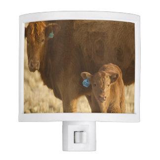 Vaca del mestizo con el becerro cerca de Choteau,  Luz De Noche