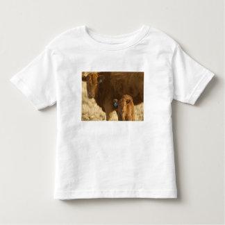 Vaca del mestizo con el becerro cerca de Choteau, Playera De Bebé