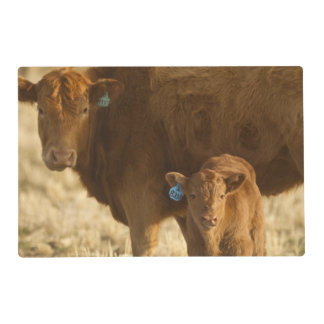 Vaca del mestizo con el becerro cerca de Choteau, Tapete Individual