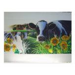 Vaca del MOO con los girasoles Postal