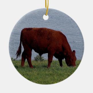 Vaca del sur de Devon en la costa costa alejada Ornamente De Reyes