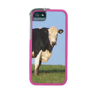 Vaca del sur de Devon en la mirada superior de la