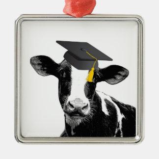 Vaca divertida de la graduación de la enhorabuena adorno